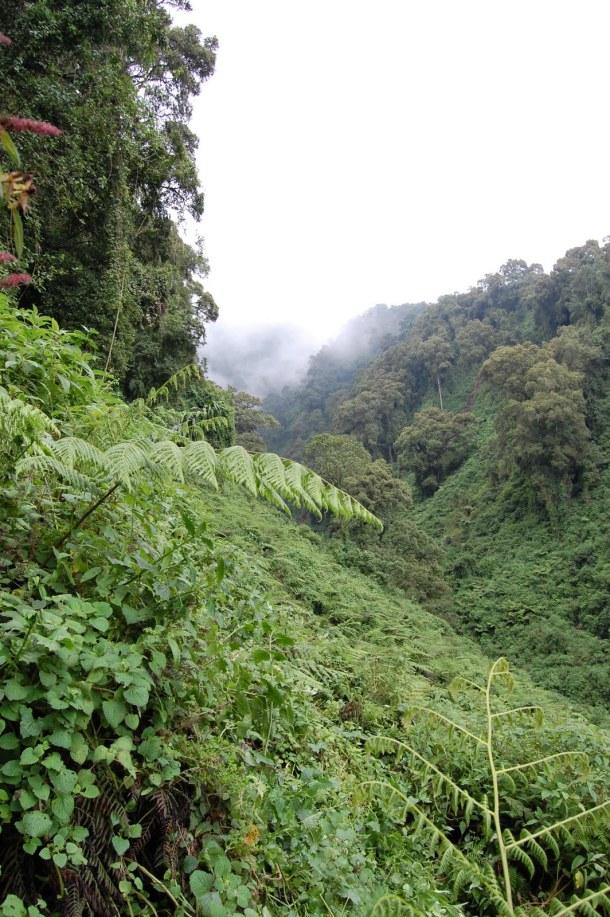 Hiking into Rwanda's Virunga Mountains to see the gorillas