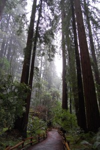 Hiking amongst the redwoods in California's John Muir National Monument