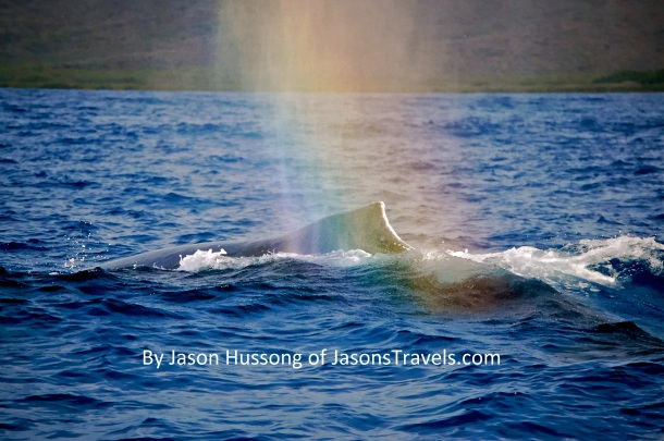 A rainbow kisses a humpback whale off the shores of Molokai, Hawaii