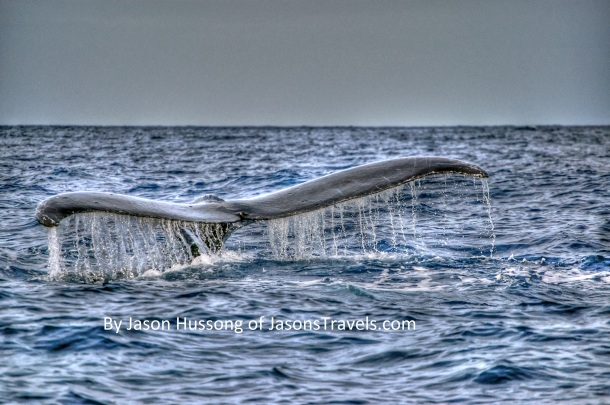 Hawaii Molokai Humpback Whale Watching Fluke