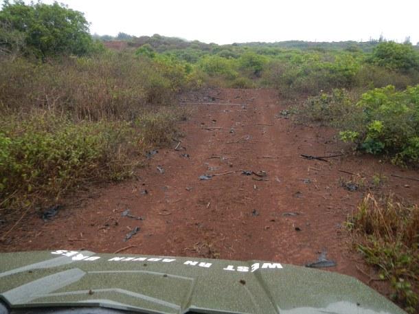 Driving the Muddy Trail with Lanai Grand Adventures Lanai Hawaii