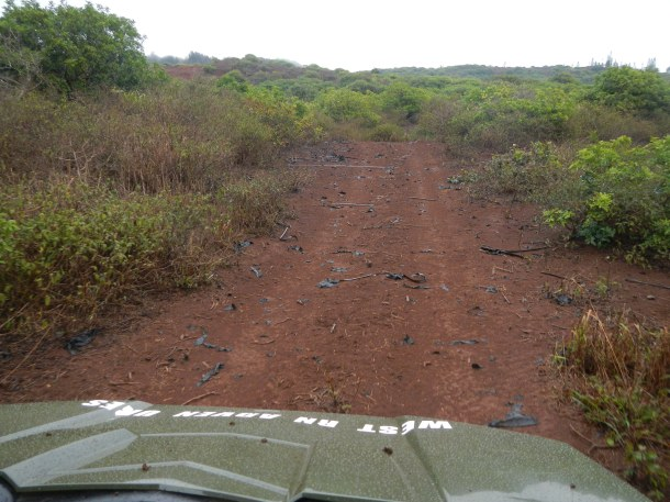 Driving the Muddy Trail with Lanai Grand Adventures Lanai Hawaii