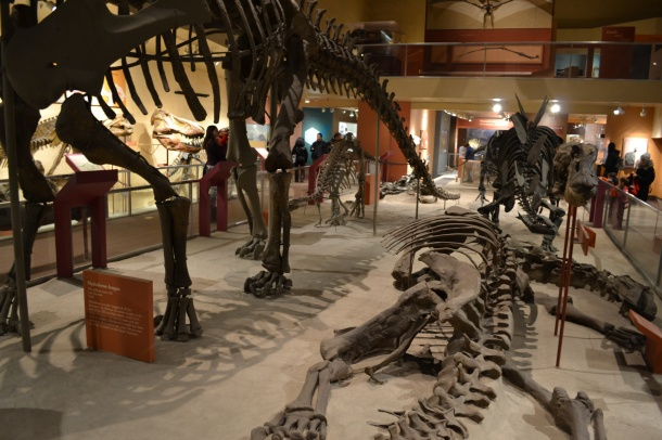 Dino bones!