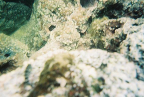 Tide pool photography failure