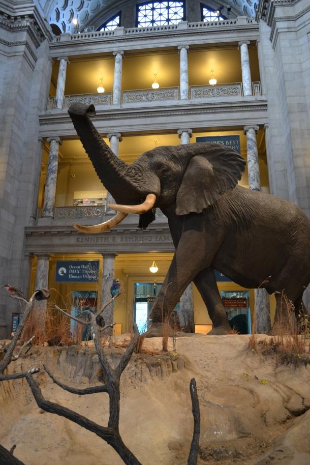 Natural History Museum entrance rotunda