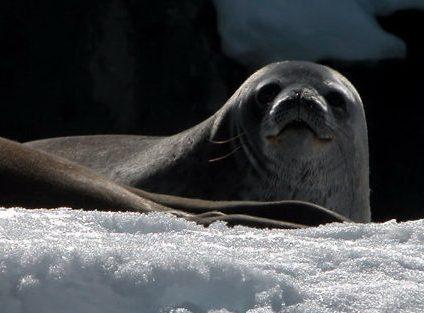 Peek-a-boo seal!