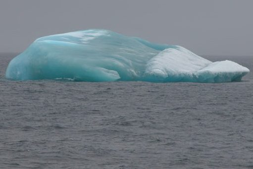 A seal-looking iceberg