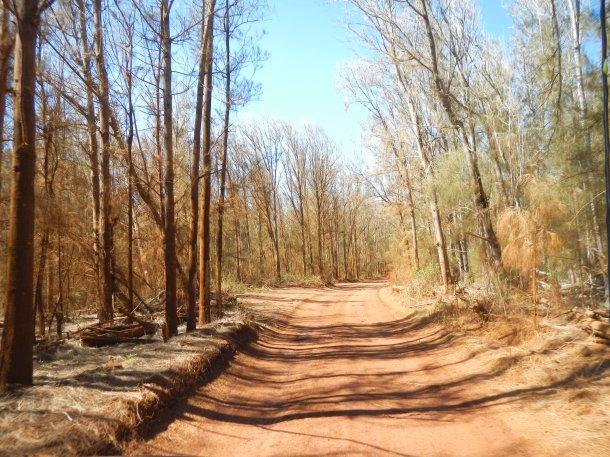 Driving through the Kanepu'u Preserve