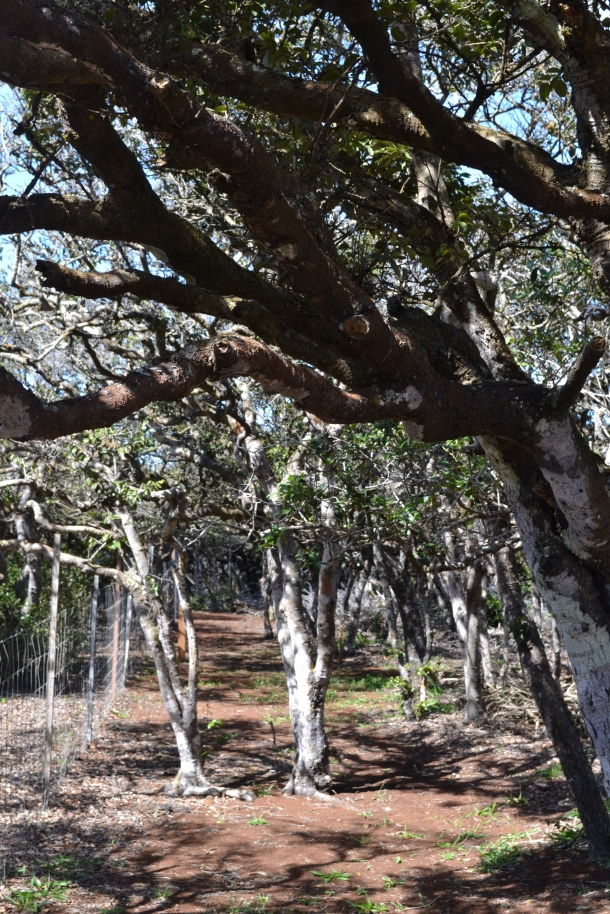 Hiking through the Kanepu'u Preserve