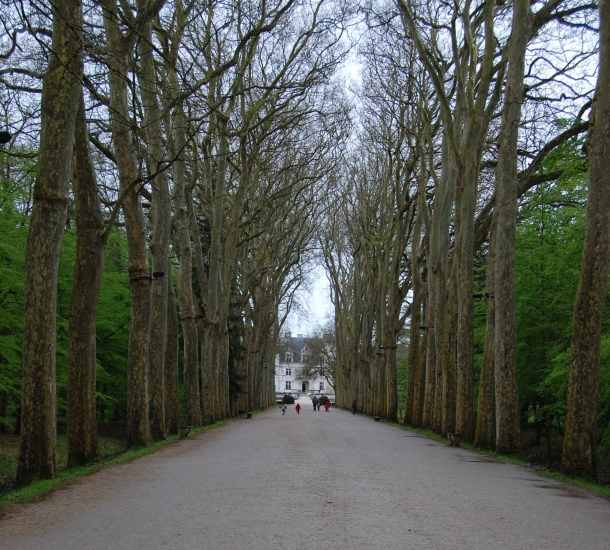 The canopied driveway to the Chateau de Chenonceau