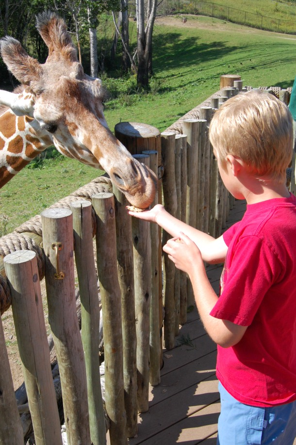 Minnesota Zoo Giraffe Feeding
