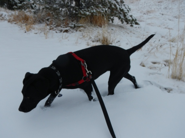 Anna playing in the snow