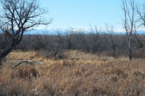 The view from Cherry Creek State Park