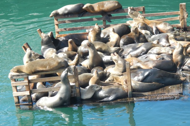 A closer look at the mass of seal flesh