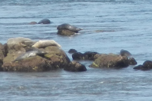 Seals on the rocks