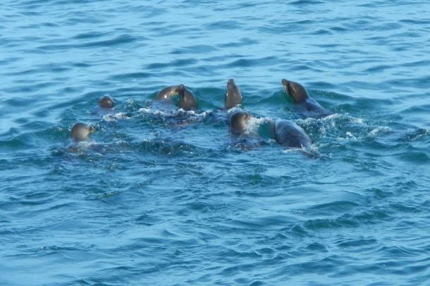 Others swim away