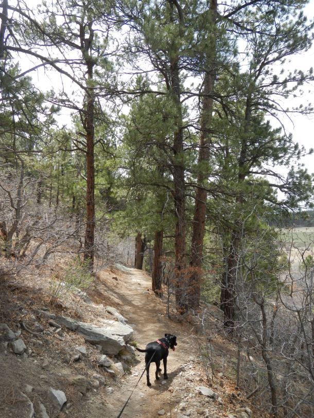 Hiking through the woods toward the Rim Trail