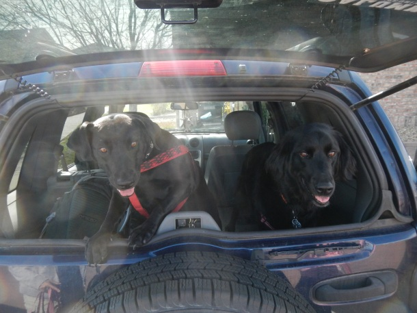 The puppies are ready for some hiking!
