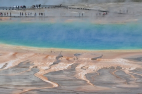 Yellowstone's Grand Prismatic from the overlook trail