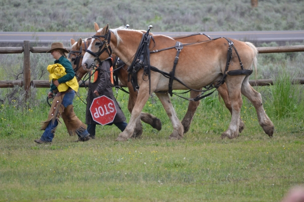 Yellowstone's Chuck Wagon Horses